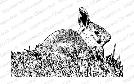Cling - Rabbit in Grass