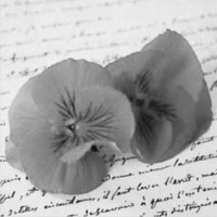 Love Notes - Pansies on Letter