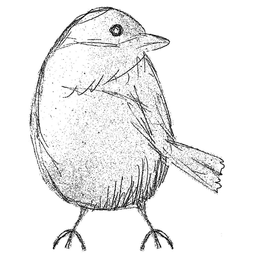 Cling - Sparrow Sketch